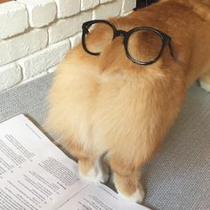 21 Pictures That Prove Corgi Butts Are The Best Thing In The World