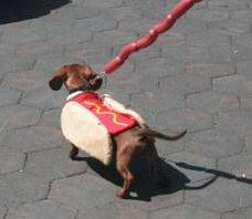 long dog with a hot dog leash this is hilarious!