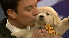 Jimmy Fallon and a golden puppy. Lucky Puppy, New Puppy, James Thomas, Golden Puppy, Man And Dog, Inked Men, All Things Cute, Jimmy Fallon, Late Nights