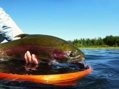 The Western North America states and provinces are home to literally tens of thousands of superb trout lakes. Many of these waters are rich in nutrients which allow them to support an abundant and diverse aquatic invertebrate food base. Quality or trophy stillwater trout fisheries can be found throughout...