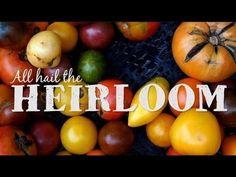 Heirloom Tomatoes - Vicki's Veggies