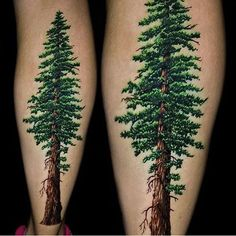 Amazing detail on this #california Coastal Redwood by @jamie_schene #inked…