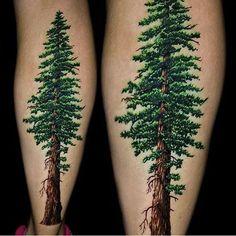 Amazing detail on this #california Coastal Redwood by @jamie_schene #inked…