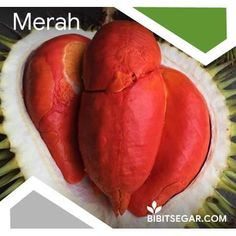 Jual Bibit Durian Super / Musang King / Bawor / Montong / Merah / Duri Hitam BIBIT DURIAN SEGAR - Hot Dog Buns, Hot Dogs, Bread, Food, Meal, Essen, Hoods, Breads, Meals