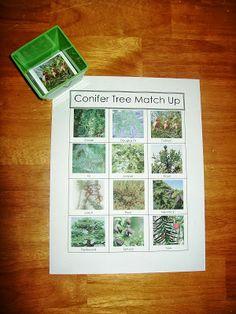 Conifer tree match up free