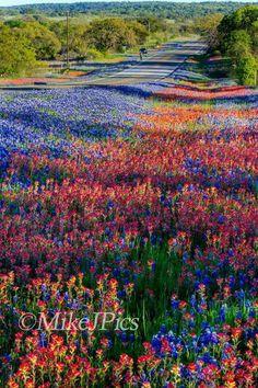 Wild flowers near Llano, TX