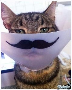 """A twist on """"The Cone Of Shame""""....I will do this!"""
