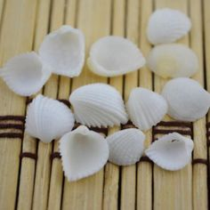 20pcs Tiny Scallop Sea Shells Beach Fan Shells Ornament Crafts Nautical Decor