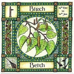 "✯ The Wisdom of Tree -:¦:- Birch, Ogham name Beith, rules 24th Dec to 20th Jan, in divination it represents a new start, beginnings and birth. Use Birch twigs for broom making ""a new broom sweeps clean"" .:☆:. Shop: The Goddess & The Green Man ✯"