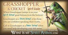 In-depth Cricket & Grasshopper Symbolism & Meanings! Cricket & Grasshopper as a Spirit, Totem, & Power Animal. Spirit Animal Totem, Animal Spirit Guides, Your Spirit Animal, Animal Totems, Native American Totem, Native American Symbols, Animal Symbolism, Animal Meanings, Spiritual Animal