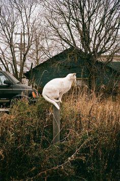 fridacalico:  Gatopoder.» Wesley Robert