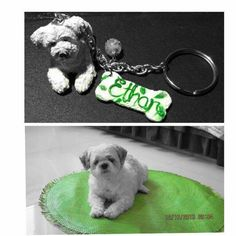 A friend's dog, Ethan (lower photo) and his mini clay pet replica key holder #artcraftedpets #ivonneramoscreations