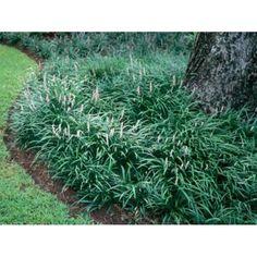 Texas Landscaping, Modern Landscaping, Landscaping Plants, Front Yard Landscaping, Landscaping Ideas, Front Yard Plants, Landscaping Software, Tropical Landscaping, Tropical Garden