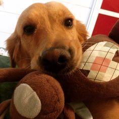#bestfriend #cute #goldenretriever
