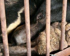 Unternehmen, die immer noch Produkte in Tierversuchen testen.