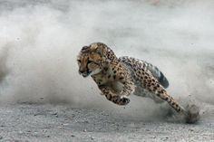 Run like the win