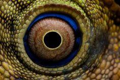 lizard eye | Flickr - Photo Sharing!: