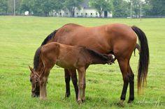 Carol Mattingly Photography: Foal