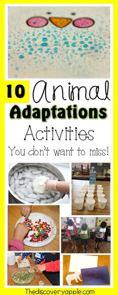 10 Exciting Animal Adaptations Activities and Resources - The Discovery Apple