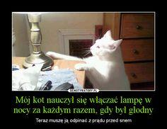 Mój kot nauczył się włączać lampę w nocy za każdym razem, gdy był głodny – Teraz muszę ją odpinać z prądu przed snem Cat Memes, Funny Memes, Haha Funny, Lol, Polish Memes, Pretty Animals, Good Mood, Laugh Out Loud, Funny Pictures