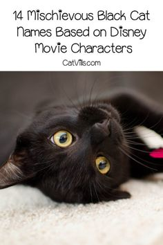 Love black cats and Disney? You're going to adore these 14 mischievous black cat names based on Disney movie characters! Check them out! Disney Movie Characters, Disney Movies, Disney Cat Names, Pet Quotes Dog, Buy A Kitten, Cat Brain, Animal Room, Munchkin Cat, Pet Pigs