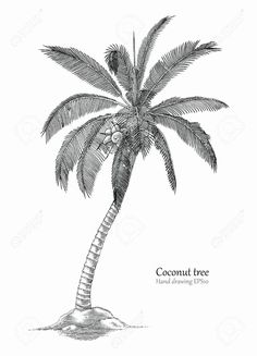 Palm Tree Pencil Drawing Unique Coconut Tree Pencil Sketch Best How to Draw Coco… - Modern Tree Pencil Sketch, Palm Tree Sketch, Tree Drawings Pencil, Tree Drawing Simple, Palm Tree Drawing, Beach Drawing, Palm Tree Outline, Palm Tree Art, Palm Trees