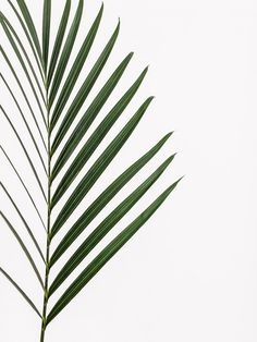 36 New Ideas For Nature Plants Art Green Leaves Green Leaves, Plant Leaves, Palm Tree Leaves, Foto Poster, Plants Are Friends, Nature Plants, Green Nature, Jolie Photo, Art And Illustration