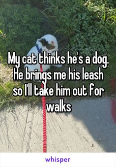 My cat thinks he's a dog. He brings me his leash so I'll take him out for walks