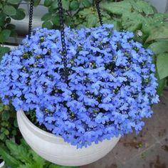400 pcs flor azul de linho sementes perene Da Família flor do jardim vasos de plantas bonsai varanda casa decoração do jardim