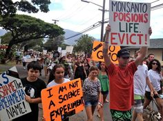 Hawaii County Council committee to vote on GMO bans. http://buzz.naturalnews.com/000980-Hawaii-County_Council-GMO_bans.html