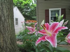 light rim stargazer lilies.  If you look close you can also see the double bloom tall lilies in the background.