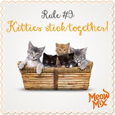 Rule #9: Kitties stick together!
