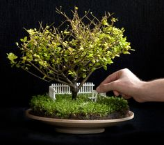 Image from http://files.idealhomegarden.com/files/commons/how_to_make_a_fairy_garden_fence_grass_moss_tree_pot_1344636604.jpg.