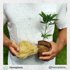 Hast du gewusst, dass Hanffasern die robusteste Naturfaser der Welt ist? Die Fasern werden aus den Stängeln gewonnen und sind Basis für Kleidung, Seile, Baustoffe und recycelt sogar für unsere Hanfuhr. Wir Hempions sind fasziniert von der Vielseitigkeit von Hanf. Die vielen Möglichkeiten waren auch ein Grund dafür, dass das Projekt Hempions entstanden ist. #hempions #hanf #alleskönner #hanffürchampions Blog, Hemp Fabric, Ropes, Hemp Seeds, Architectural Materials, Recyle, Foods, Kleding, Blogging