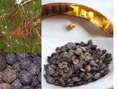 Locust bean acts as an antioxidant.