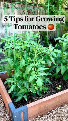 Backyard Vegetable Gardens, Container Gardening Vegetables, Veg Garden, Tomato Garden, Vegetable Garden Design, Planting Vegetables, Edible Garden, Growing Vegetables, Backyard Plants