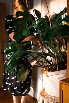 Pflanzenpflegetipps findest du bei Fridlaa Organic Plants, First Apartment, Outdoor Plants, Plant Care, Plant Leaves, Indoor, Home Decor, Blue Prints, Cat Breeds