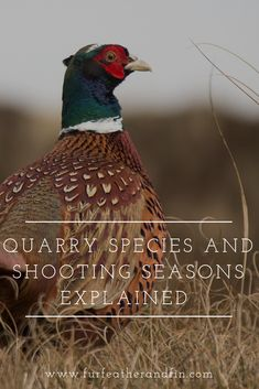 Quarry Species and Shooting Seasons Explained British Wildlife, Interesting Information, Country Life, Enchanted, Woodland, Fun Facts, Infographic, Seasons, Country Living