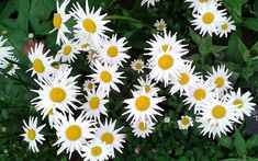 Magical white gardens are easy to achieve at home. TV Gardener David Domoney chooses his top white plants for chic, elegant flowers. Elegant Flowers, White Flowers, Boarder Plants, White Flowering Shrubs, Front Gardens, White Plants, White Gardens, Cool Plants, Look Chic