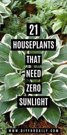Low Light Houseplants That Can Survive In The Darkest Corner Of Your House There are many plant species nowadays that can survive in the dark lighting conditions and luckily are available easily in the market. Indoor Plants Low Light, Best Indoor Plants, Outdoor Plants, Indoor Garden, Patio Plants, Garden Planters, Easy House Plants, House Plants Decor, Plant Decor
