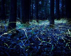 Time lapse fire flies...omg how did i never think of that