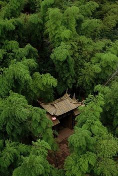 traditional Japanese architecture perfectly blends/matches with nature in this forest