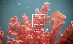 """Pantone have announced their 2019 colour of the year and it's a vibrant Living Coral! Pantone describes Living Coral as """"an animating and life-affirming coral hue with a golden undertone that energizes and enlivens with a softer edge. Yoga Studio Design, Coral Pantone, Pantone Color, Color Trends, Design Trends, Web Design, Design Ideas, Brand Design, Graphic Design"""