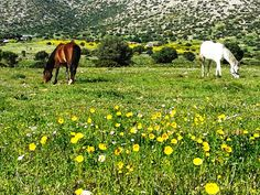 Two horses in spring