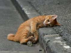 Cats – Katzen, shouldn't have had one for the road - Cutest Baby Animals Animals And Pets, Baby Animals, Funny Animals, Cute Animals, Cute Kittens, Cats And Kittens, Beautiful Cats, Animals Beautiful, Crazy Cats