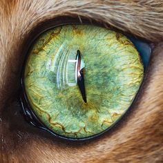 Beautiful Macro Cat Eye Photography
