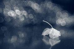 Shihya Kowatari 19 - Beautiful Photography by Shihya Kowatari  <3 <3