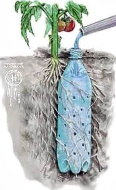 Reuse a bottle with holes for a slow-release plant waterer.