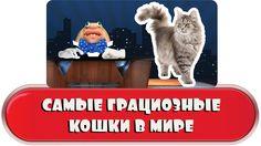 Самые грациозные кошки в мире