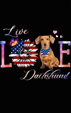 Dachshund Quotes, Dachshund Love, Dachshunds, Doggies, Wiener Dogs, Computer Tips, Water Slides, Sausages, Sign Quotes